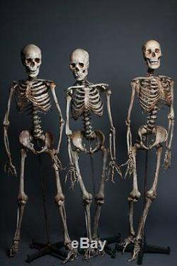 3 Skeletons De La Scène Du Crime The Walking Dead Hanté Halloween Costume & Décoration